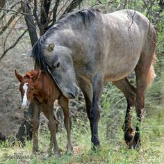 Horse Love, Mare and foal.