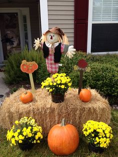 My fall yard decor - yellow mums, pumpkins, hay bale and a cute little scarecrow