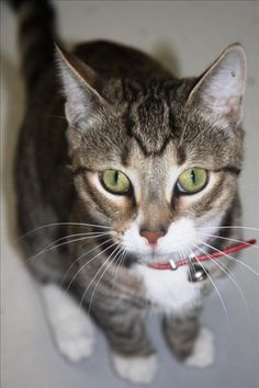 Animal Shelter, Animal Rescue, Paws And Claws, Four Legged, Pet Care, Cuddling, Cats And Kittens, Cute Cats, Fur Babies