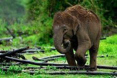 Elephant Baby Eating Kabini Backwaters
