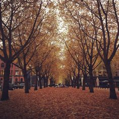 Pioneer Square, Seattle. Can't you almost feel the leaves crunching under your feet?