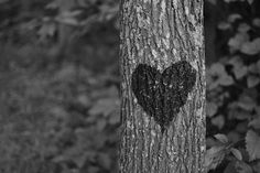 Heart in nature