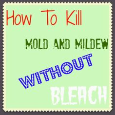 How to kill mold and mildew without bleach