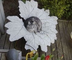 This is a concrete leaf made from a Gunnera leaf last year. You can see how to make one of your own on our concrete leaf tutorial page.