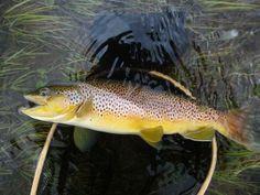 Fishing in Hemsedal - Norway   Inatur.no