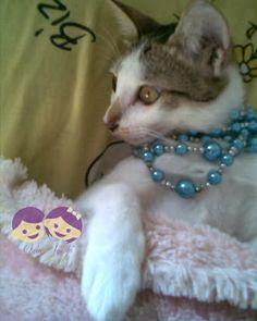 Kucing dan terdakwa 'Toxoplasmosis' | Oyin Ayashi