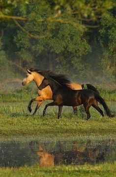Welsh Pony mares by Karolina Wengerek Equine Photography All The Pretty Horses, Beautiful Horses, Animals Beautiful, Beautiful Gorgeous, Beautiful Couple, Absolutely Gorgeous, Horse Photos, Horse Pictures, Arte Equina