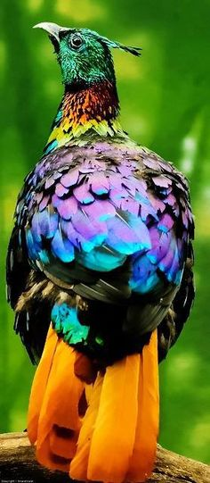 The 20 Most #Colorful #Birds In The World