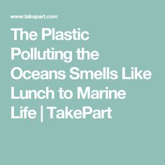 The Plastic Polluting the Oceans Smells Like Lunch to Marine Life   TakePart