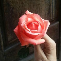 #rosa #flor #pic  #goodvibes #inspire