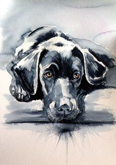 Buy Black labrador 50 x 35 cm, Watercolour by Kovács Anna Brigitta on Artfinder. Discover thousands of other original paintings, prints, sculptures and photography from independent artists. Labrador Noir, Black Labrador, Golden Labrador, Art Watercolor, Watercolor Animals, Animal Paintings, Animal Drawings, Impressionism Art, Dog Portraits
