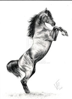 Rearing Arabian by drinkerofthewind Horse Pencil Drawing, Horse Drawings, Animal Drawings, Art Drawings, Hirsch Silhouette, Abstract Horse Painting, 30 Day Art Challenge, Horse Tattoo Design, Horse Rearing
