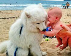 Bolt's Friends on the beach