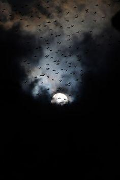 "plasmatics-life: "" Hiding from the birds   by: { Guna Sekar} """