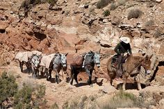 Lorrie hired a mule train to bring supplies to Sugar Valley in Detour Trail.