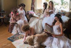 Shai, Afghan Hound Actor Based in Southern California - Los Angeles Los Angeles California, Southern California, Handmade Wedding Dresses, Bohemian Style Dresses, Afghan Hound, Actor Model, Dress Making, Wedding Events, Flower Girl Dresses