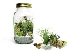 Pflanzen, Bäume & Sträucher - Zen Garten ♥ Beach Terrarium - ein Designerstück von Das-Grashaus bei DaWanda