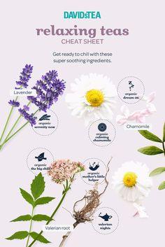 6 wellness teas that quench more than just your thirst - Steep Thoughts Relaxing Tea, Davids Tea, Herbal Magic, Tea Benefits, Health Benefits, Types Of Tea, Tea Gifts, Oolong Tea, Tea Blends
