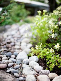 Kotivinkki: Kivipuutarha kukoistaa syksylläkin - katso vinkit! Boulder Retaining Wall, Landscape Design, Garden Design, Forest Garden, Buy Flowers, Garden Inspiration, Garden Ideas, Blueberry, Outdoor Living