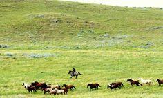 PR Cattle Drive Cattle Drive, Dream Vacations, Bucket, Spaces, Lifestyle, Travel, Viajes, Destinations, Traveling