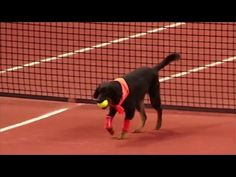 Tennis ball dogs: Video of shelter rescue dogs as tennis ball champs sparks hope | Examiner.com