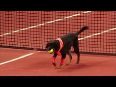 Street dogs retrieve balls during Brazil tennis tournament