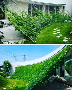 Pretty cool way to establish shade the environmentally friendly way #lawncare