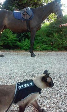 Feline Bureau of Investigation