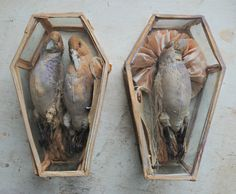 Textile birds in glass coffins