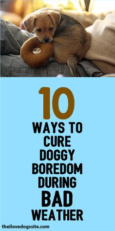 10 Ways To Cure Doggy Boredom During Bad Weather