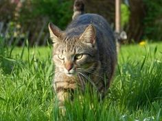 How Lawn Chemicals Affect Your Cats - Even Indoor Cats - The Conscious Cat