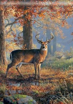 BreezeArt Deer Wilderness Nature Forest Turkeys Hunter Cabin Decor Standard House Yard Flag 28 x 40 18 99 Free US Shipping Wildlife Paintings, Wildlife Art, Animal Paintings, Whitetail Deer Pictures, Deer Photos, Deer Drawing, Horse Drawings, Drawing Art, Hunting Art