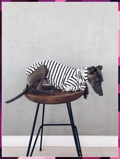 italian greyhound and whippet clothes / iggy clothes / Dog Sweater / stripes dog clothes / ropa para galgo italiano y whippet Italian Greyhound Clothes, Dog Clothes Patterns, Dog Leash, Dog Harness, Dog Coats, Dog Accessories, Dog Walking, Dog Supplies, Dog Owners