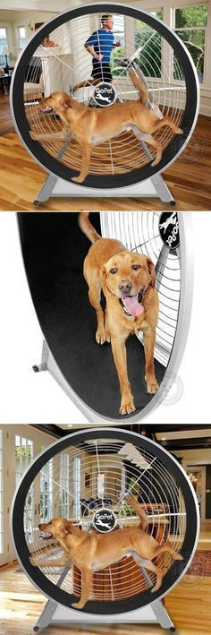 A giant hamster wheel for dogs! Now you can give your dog the cardio workout he needs without even leaving the house, using the Gopet TreadWheel. The TreadWheel allows any dog to workout at their own pace, and in a very limited space. It will help relieve boredom, keeping your dog happy and healthy, and adding years to their lives! It's also great for bad weather or city living where you may not be able to get out as much as you want, or need!