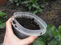 Mieren: katten, ratten en luizen houden niet van koffie, maar mieren blijven ook weg als je koffieprut neerlegt....Houten vloer? Gebruik koffieprut om je vloer schoon te maken. Strooi de koffieprut uit over een houten vloer en laat het een tijdje liggen. Veeg daarna de vloer en je vloer is weer spik en span. .. Gooi het niet weg je kan het gebruiken voor vele dingen meer...