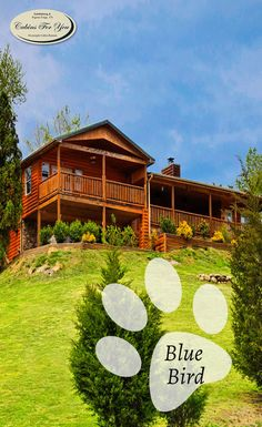 Have you been searching for the perfect cabin rental for your upcoming family…