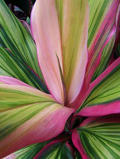 Tropical foliage has so many colors to enhance your landscape