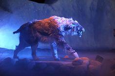 ¿Por qué se extinguió el tigre dientes de sable?
