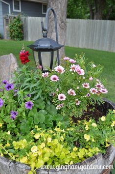 Whiskey Barrel Planter with Yellow Calibrocha, Pink Marguerite Daisy, Picasso in Blue Supertunia
