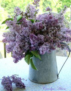 Aiken House & Gardens: A Sunday Bouquet; lovely lilac pics/blog