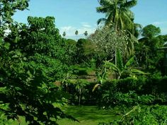 View from our Madang house