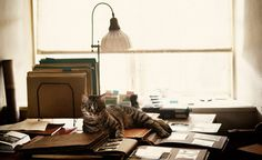 """Tjorven, the cat from """"The Girl With The Dragon Tattoo"""""""