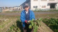 グリーンエコスター野洲農園の冬野菜⑪