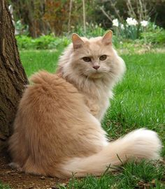 """A cat is a lion in the grass."" --English Proverb"