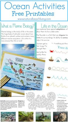 The Best Ocean Unit Study for Kids, Homeschool education, Marine Biology for Kids, Under the Sea Loose Parts play and Summer Nature Table, Free Printables