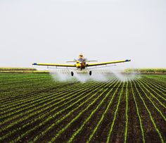 Study: Pesticides could cause unexpected allergic reactions
