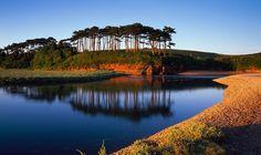 Beautiful Corsican Pines at Budleigh Salterton Budleigh Salterton, Devon Beach, Visit Devon, Exeter Devon, Jurassic Coast, Devon England, South Devon, Devon And Cornwall, Farm Shop