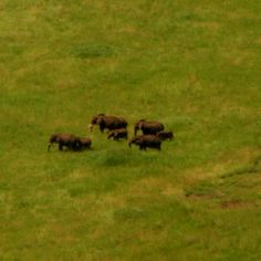 A herd of elephants seen from the ledge of the Ngorongoro crater in Tanzania