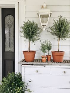 How To Have A Green Thumb – Caring For your Plants |