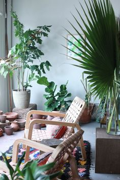 Indoor plants including a ficus lyrata fiddle leaf fig tree. House plants of all shapes and sizes.